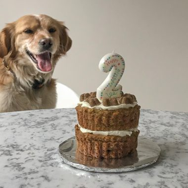 This Is The Best Doggie Birthday Cake According To My Dog And Its Pretty Easy Friend