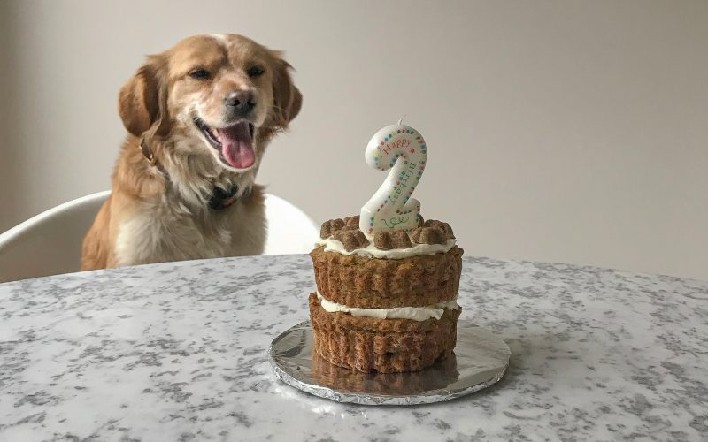 Superb This Is The Best Doggie Birthday Cake According To My Dog And Funny Birthday Cards Online Overcheapnameinfo